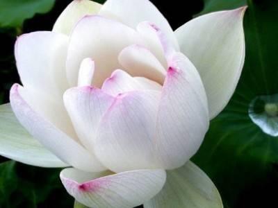一念心清净 处处莲花开:《禅与沉》