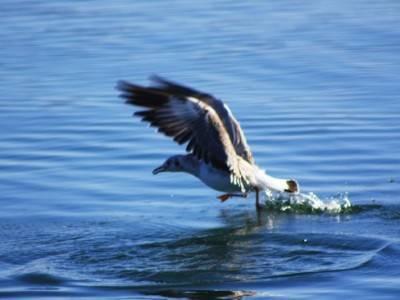 水的季节鸟