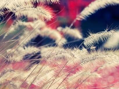 轻俏柔美的小调:《彩月-Saigetsu 2012 - otokaze》