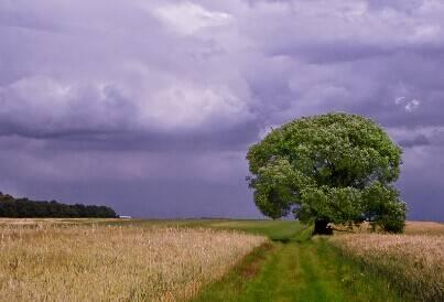 带着一股来自北欧的清冷空气:《Before The Storm》