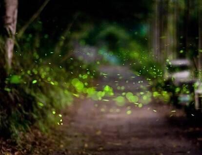 保持一颗童心,生活或许会不一样:《黏蝉的老人(音乐:夏夜晚风)》