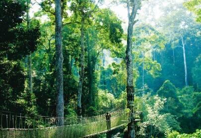 雨林 深处