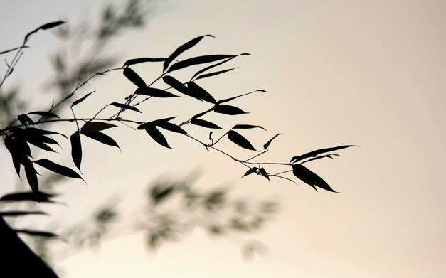小时候夏天的味道,无知小儿难得一静,开门,等风:《轻风》