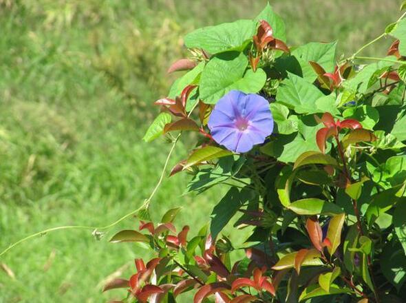 想藏起来的人,不要试图去找,让思念在心里生根开花:《月吟诗 - 归雁》
