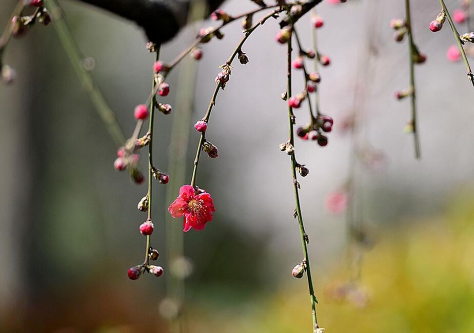 温暖的小调:《盛开成花树》