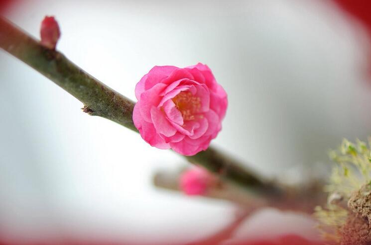 绽放 ~Blooming~