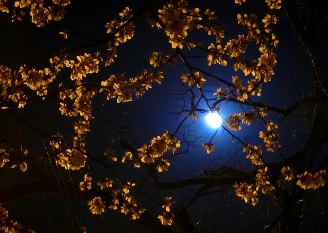 百家乐导航:《城里的月光 》