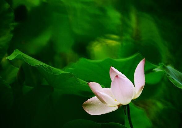 一念心清净,莲花处处开:《空怀若谷》