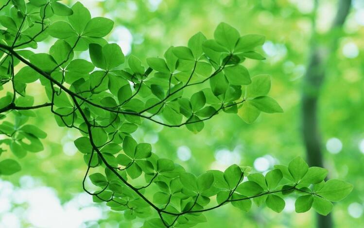 森林赞歌:《Forest Hymn》