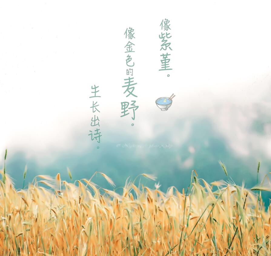 过清新的生活,爱清水样的人:《那风停下》