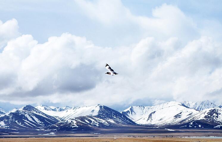 爱大自然、爱地球、与自然和谐相处:《长寿六宝 ཚེ་རིང་རྣམ་དྲུག》