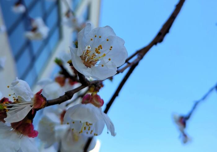 春风拂面,百花盛开,走进大自然,听花开的声音:《春暖花开》
