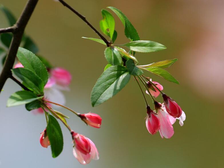 春风浮动绿丝条,能惊起不少的鸟:《落叶的风语》