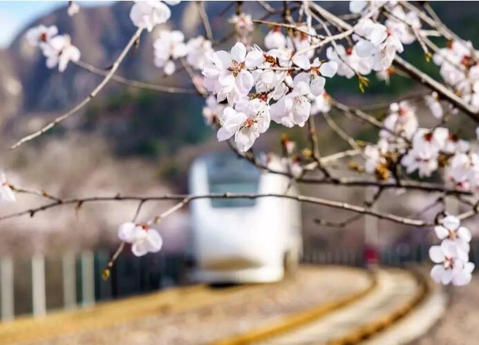 一首欢快的小清新,如烟如风,似桃花盛开,更胜春风十里:《花间游》